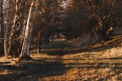 秋天在丹麦,乡下公路 免版税库存照片