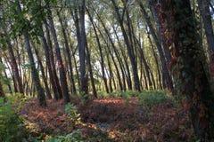 秋天在乌克兰城市Kirovograd 库存图片