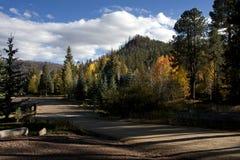 秋天在亚利桑那上色森林叶子 免版税库存照片