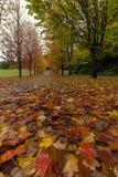秋天在人行道的槭树叶子 库存图片