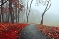 秋天在偏僻的胡同浓雾有雾的秋天风景的公园胡同有光秃的秋天树和橙色下落的叶子的 免版税库存图片