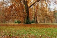 秋天在公园。 库存图片