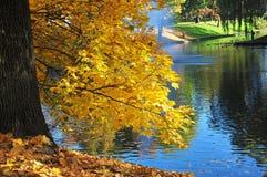 秋天在公园在里加 库存图片