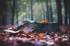 秋天在公园选择聚焦 库存照片