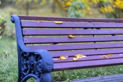 秋天在公园,一部分的与黄色的生动的紫罗兰色长凳留下特写镜头 五颜六色的怀乡背景 免版税库存照片