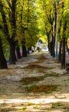 秋天在公园,利沃夫州 免版税库存照片