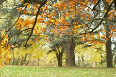 秋天在公园 金黄结构树 Parc阿斯特丽德 免版税库存图片