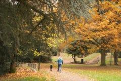 秋天在公园 金黄结构树 Parc de Scherdermael,安德莱赫特,比利时 库存照片