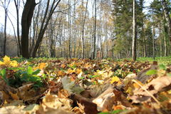 秋天在公园 免版税库存照片