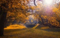 秋天在公园 免版税图库摄影