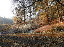 秋天在公园 库存照片