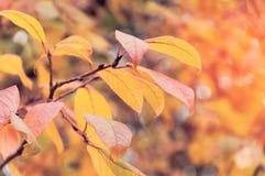 秋天在分支的黄色叶子 黄色叶子在背景中 库存图片