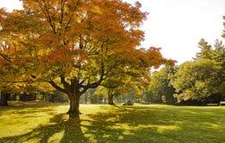 秋天在加蒂诺 免版税库存照片