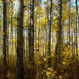 秋天在北不列颠哥伦比亚省 库存图片