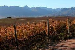 秋天在南非。 免版税库存图片