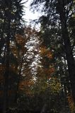 秋天在厚实的森林 库存照片