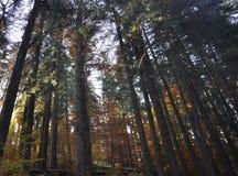 秋天在厚实的森林 免版税库存图片
