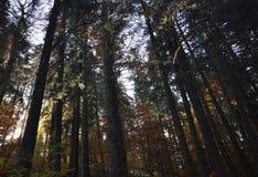 秋天在厚实的森林 库存图片