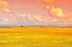 秋天在原始的大草原在四川 库存照片