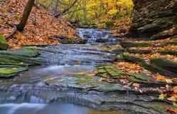 水秋天在哈密尔顿 免版税库存图片
