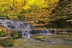 水秋天在哈密尔顿 免版税图库摄影