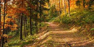 秋天在园地dei Fiori,瓦雷泽公园  图库摄影