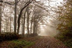 秋天在图赖讷,法国 免版税库存照片