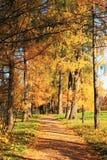 秋天在圣彼德堡 免版税库存照片