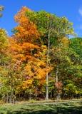 秋天在圣徒布鲁诺公园的季节散步 免版税库存照片
