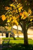 秋天在圣路易斯 免版税库存照片
