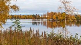 秋天在坦佩雷芬兰 免版税库存图片