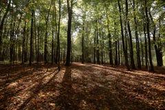 秋天在城市公园 库存照片