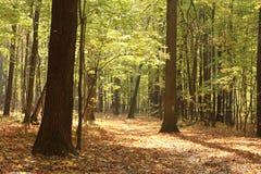 秋天在城市公园 库存图片
