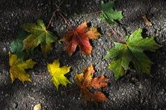 秋天在城市公园 图库摄影