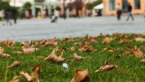 秋天在城市广场- timelapse 股票录像