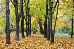 秋天在城市,叶子的秋天,黄色叶子, 免版税库存照片