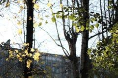 秋天在城市,黄色通过哪些离开您能看到一个多层的房子 免版税图库摄影