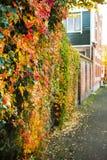 秋天在城市-弗吉尼亚州人 库存照片