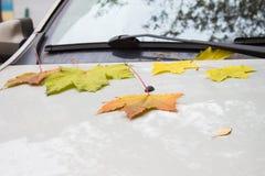 秋天在城市 黄色,绿色,红色下落的叶子在说谎 库存图片