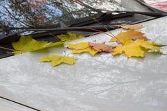 秋天在城市 黄色,绿色,红色下落的叶子在说谎 免版税库存照片