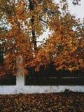 秋天在城市 免版税库存照片