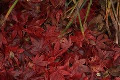 秋天在堆离开 免版税库存照片