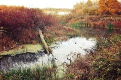 秋天在多云天气,葡萄酒的森林风景定调子 库存图片