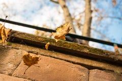 秋天在天空中结冰的叶子铁锈 免版税库存照片