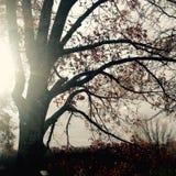 秋天在天空中 库存照片
