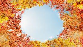 秋天在天空背景的叶子框架,各种各样的五颜六色的秋天离开框架 库存照片