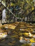 秋天在密执安 图库摄影