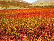 秋天在寒带草原 免版税图库摄影