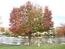 秋天在小河边的秋天树 库存图片