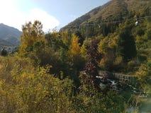 秋天在山森林里 库存照片